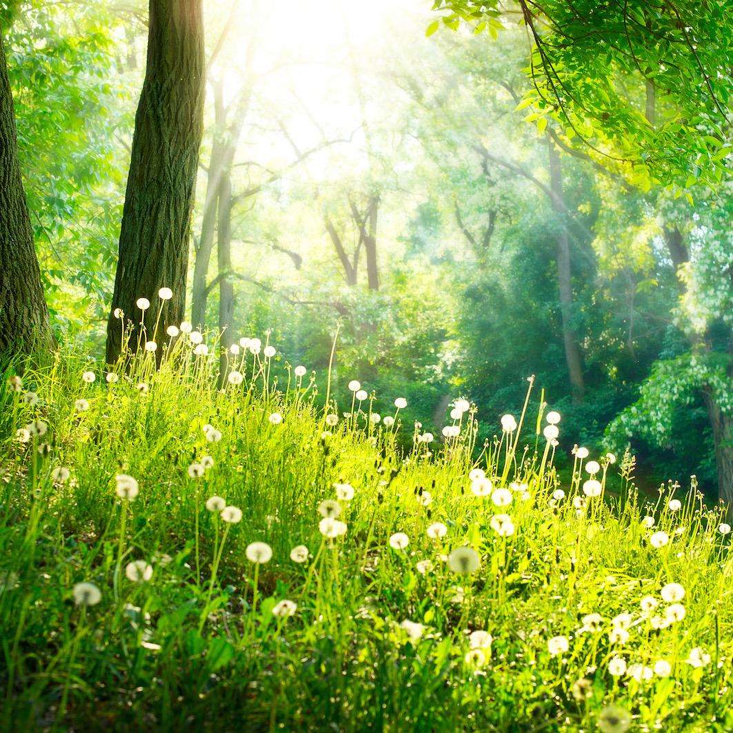 Voorjaar op de Veluwe